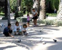 Några kvinnor och barn matar duvor på en parkera i Elche, Alicante, Spanien royaltyfria bilder