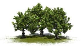 Några olika träd för amerikansk bokträd på en grönområde vektor illustrationer