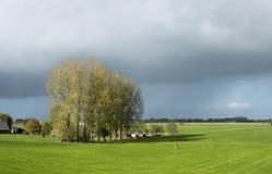 Några popplar i de gröna fälten i Nederländerna Royaltyfri Fotografi