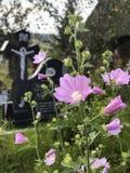 Några rosa blommor i en kristen kyrkogård royaltyfria bilder