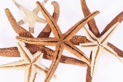 Några sjöstjärnor på det vita bakgrundsslutet upp Arkivbild