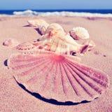 Några snäckskal på sanden av en strand med en retro filtereffekt Royaltyfria Foton