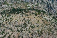 Några träd i berg arkivfoto