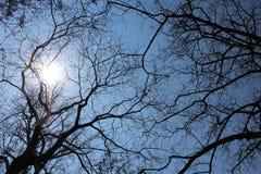 Några träd i vinter Arkivbild