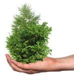 Några trees i en hand som isoleras Royaltyfria Bilder