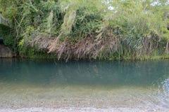 Några växter och en flod Royaltyfria Bilder