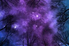 Nébuleuse brillante sur le ciel nocturne étoilé, arbres de cuvette de vue d'angle faible illustration stock