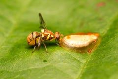 Néctar da abelha nas folhas imagem de stock royalty free