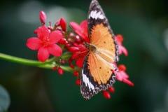 Néctar da manhã Foto de Stock