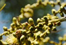 Néctar de alimentación del trabajador de la abeja de la flor de la palma en jardín Imagenes de archivo