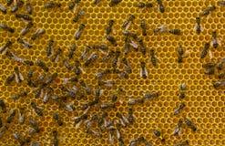 Néctar de la conversión en la miel Foto de archivo libre de regalías