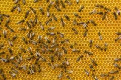 Néctar de la conversión en la miel Fotografía de archivo libre de regalías