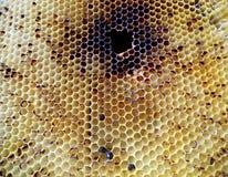 Néctar de la miel de la colmena Foto de archivo