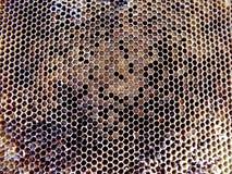 Néctar de la miel de la colmena Fotos de archivo libres de regalías
