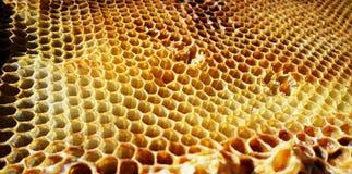 Néctar de la miel de la colmena Fotografía de archivo