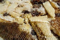 Néctar de la miel de la colmena Imágenes de archivo libres de regalías