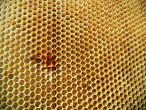 Néctar de la miel de la colmena Fotos de archivo