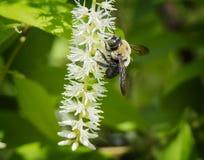 Néctar de la primavera Fotografía de archivo
