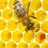 Néctar del convertido de la abeja en la miel Imagenes de archivo