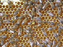 Néctar y miel Imagenes de archivo