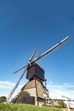 Néerlandais géant photographie stock