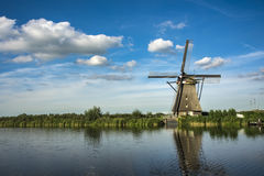 Néerlandais géant photo stock