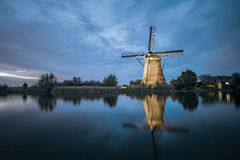 Néerlandais géant bleu photo libre de droits