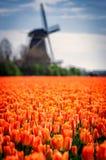 Néerlandais type photos libres de droits