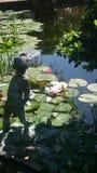 Nénuphar à l'étang Image stock