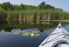 Nénuphar dans le marais Photos stock