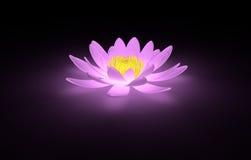 Nénuphar rose rougeoyant de lotus Photos stock