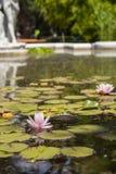 Nénuphars dans la fontaine un après-midi ensoleillé photos stock