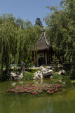 Nénuphars dans le jardin chinois photographie stock