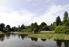 Nénuphars - protection de nymphaeaceae ou de lis dans le lac Shefield, Uckfield, Royaume-Uni photographie stock libre de droits
