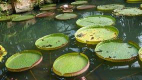 Nénuphars sur la piscine Image libre de droits