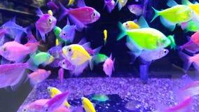 Néon brilhante peixes coloridos imagem de stock