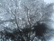 névoa, árvore, tarde chuvosa fotos de stock