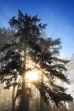 Névoa, árvores e sol Foto de Stock Royalty Free