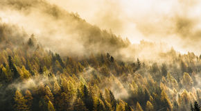 Névoa alpina Fotos de Stock Royalty Free