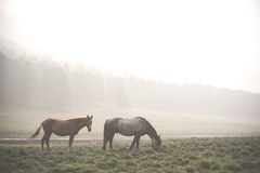 Névoa arounded cavalos na ilha de Olkhon baikal Imagem de Stock Royalty Free