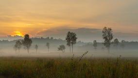 A névoa bonita da manhã pendura baixo sobre uma pastagem e árvores imagens de stock