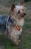 Névoa bonito com medalha Imagem de Stock Royalty Free