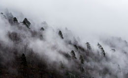 A névoa cobriu árvores foto de stock royalty free