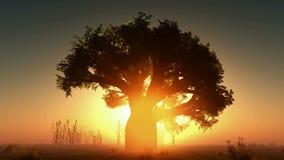 Névoa com sol e as árvores de incandescência 3D rendido ilustração stock