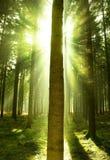 Névoa da floresta imagem de stock