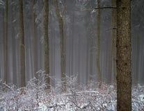 Névoa da madeira do inverno Imagens de Stock