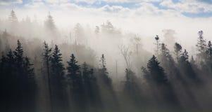 Névoa da manhã Fotografia de Stock