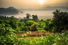 Névoa da manhã em Phu Lang Ka Fotos de Stock