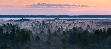 Névoa da manhã em um pântano Imagem de Stock Royalty Free