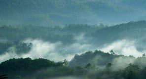 Névoa da manhã na floresta Foto de Stock